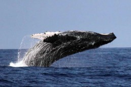 The Whales Tail Charters | Photo Gallery